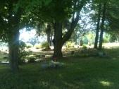 Trees Over Great Grandma and Grandpa