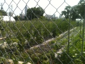 One of the largest urban farms in the U.S. at nearly six acres