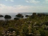 bush bay