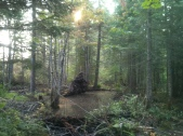 Hiking through the Bogs