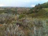 Sage Field