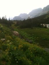 Glacial Meadow