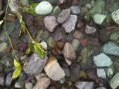 """Glacial Rock """"Garden"""" Water's Edge"""