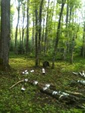 The Vert Canopy