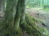 Root Love