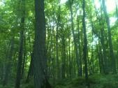 Michigan Jungle
