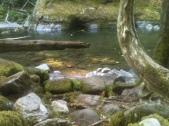 Cedar View