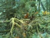 Forest Vein