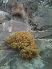 Cliffside Domociles