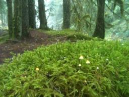 Mt Hood's Front Lawn