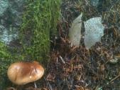 Fungal Neighbors