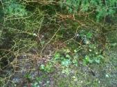 Web of Life