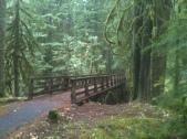 Bridge over Lost Creek