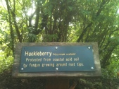 The Coastal Huckleberry