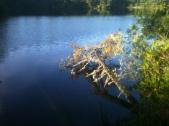 Morning Lakeside