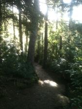 Footpath Around the Lake