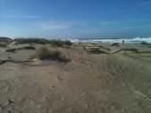 The Oregon Sand Dunes