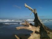 Tree Carcass