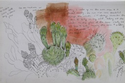 cactus bloom sketch by Spencer Fisher