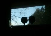 Goblet Life