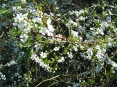 Bush Blooms