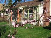 Neighboring Blooms