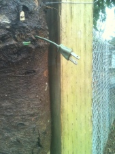 Tree unplugged