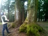 Great Mt. Tabor Tree
