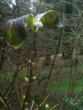 Leaves Unfolding