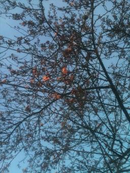 Blossom times