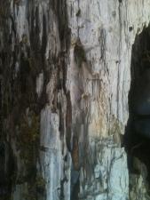 Bleached Log