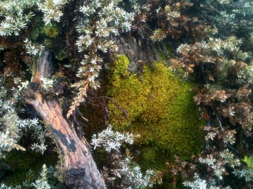 Moss Pocket