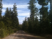 Forest Road 2820