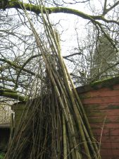 Bamboo Leanings