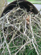 Branchy Basketcase