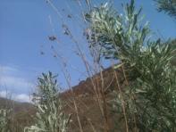 Sagebrush Skies