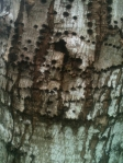Woodpecker Zone
