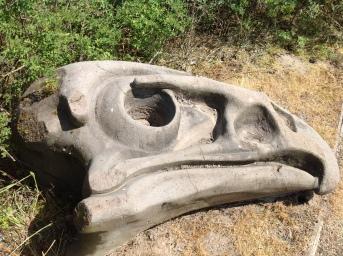 Skull Facsimile