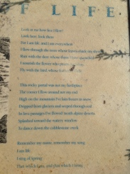 Poem at Mossy Springs Viewpoint