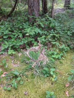 Bear Grass Twist