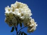 Sky Bouquet