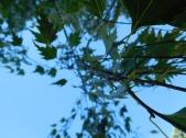 Der Leafy Dance