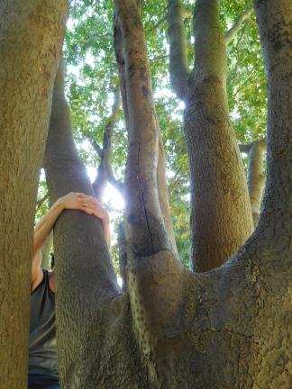 Yup, Treehugger