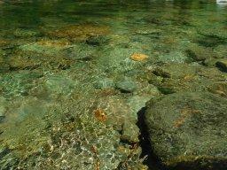 Salmon Waters