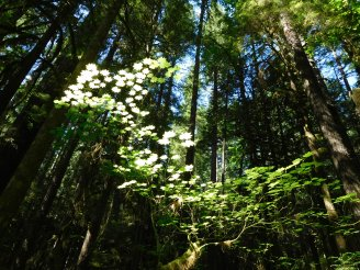 Lightness of Canopy