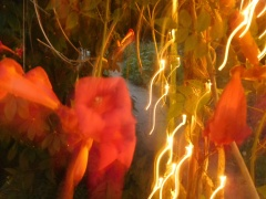 Plant Vision