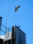 Dock Birds
