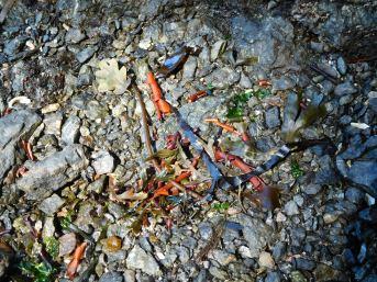 Sea Detritus
