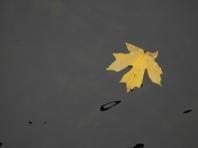 Keyhole of Autumn