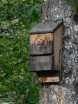 Batty-Bat House